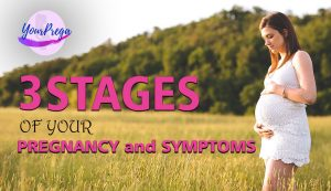 3 Stages of your Pregnancy and Symptoms