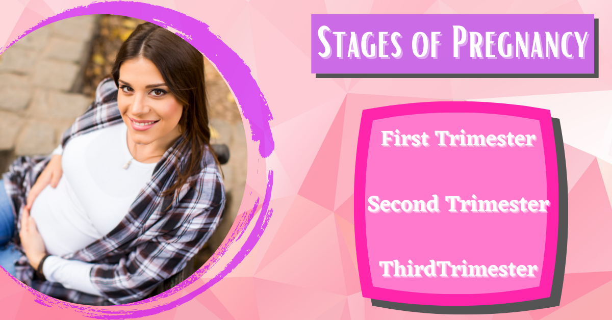 The stages of pregnancy